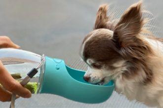 愛犬にもCuWater  嬉しい写真届きました!